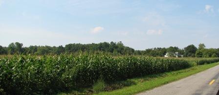 IMG_6682_corn