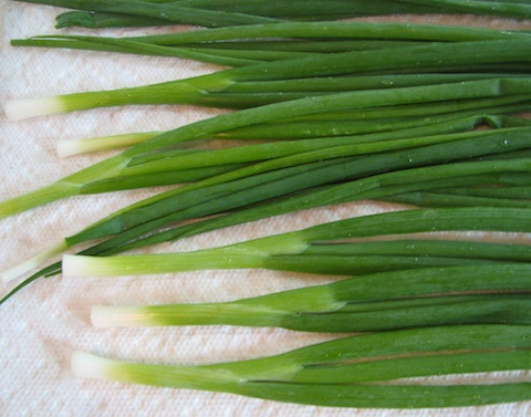 Green onions ready for freezing