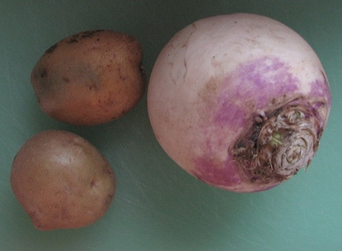 Yukon potatoes and purple turnip