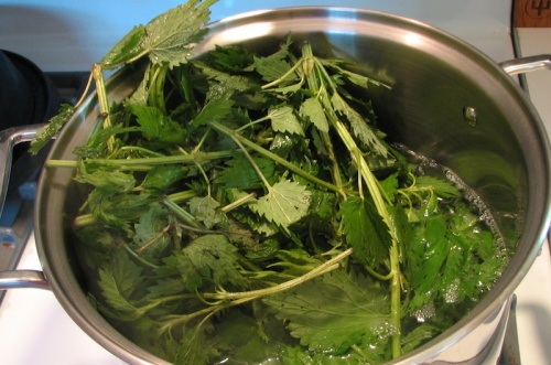 Stinging nettles recipe
