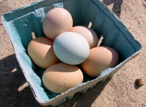 Fresh eggs from Good Harbor Farm